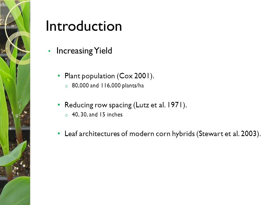 Introduction Increasing Yield Plant population (Cox 2001). o 80,000 and 116,000 plants/ha Reducing row spacing (Lutz et al. 1971). o 40, 30, and 15 in