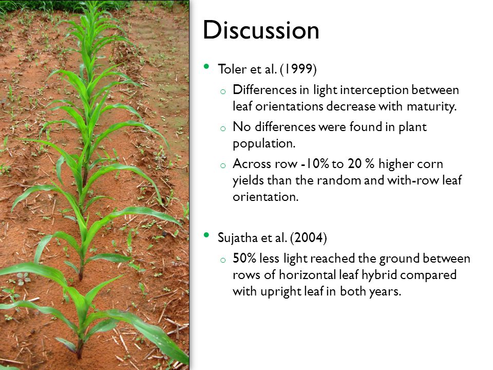 Discussion Toler et al. (1999) o Differences in light interception between leaf orientations decrease with maturity. o No differences were found in pl