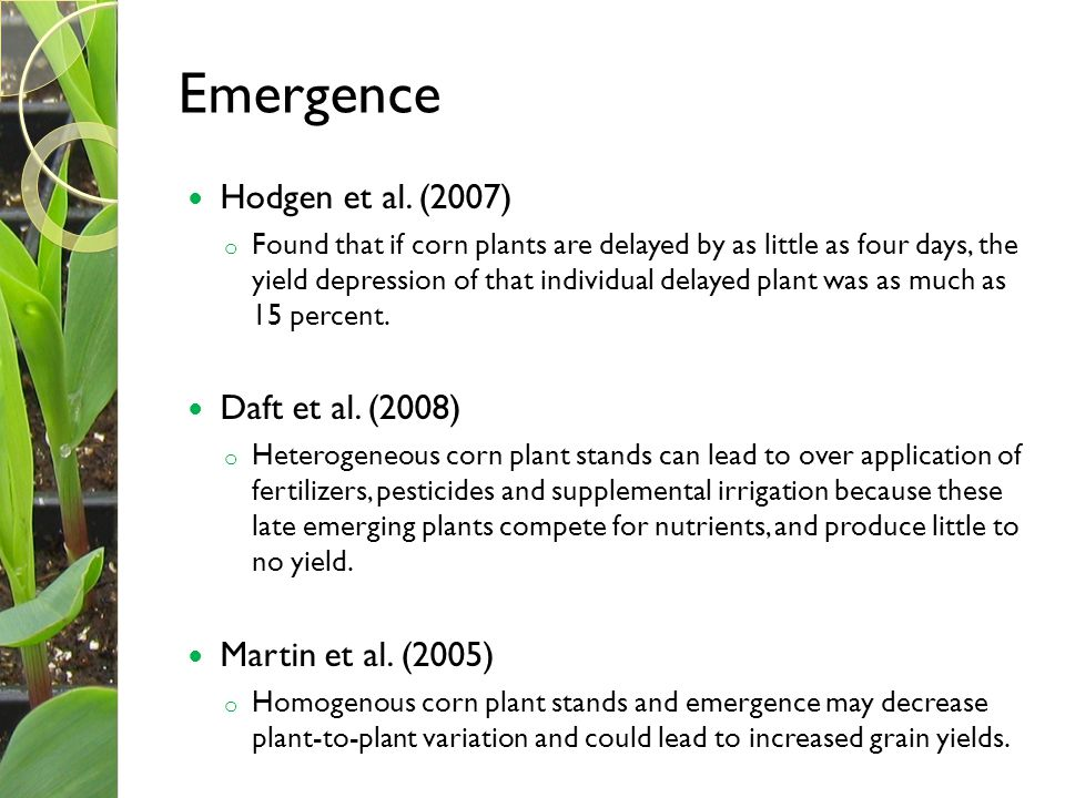 Emergence Hodgen et al. (2007) o Found that if corn plants are delayed by as little as four days, the yield depression of that individual delayed plan