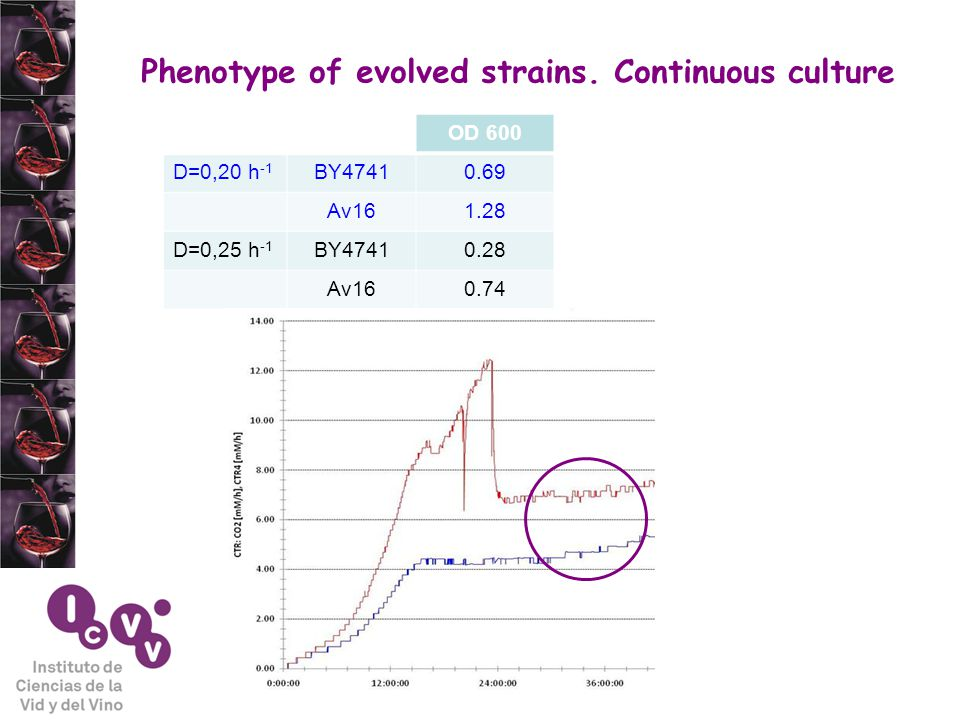 Phenotype of evolved strains.
