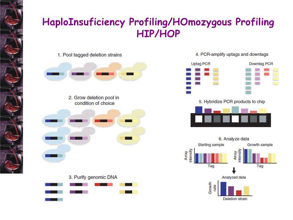 HaploInsuficiency Profiling/HOmozygous Profiling HIP/HOP