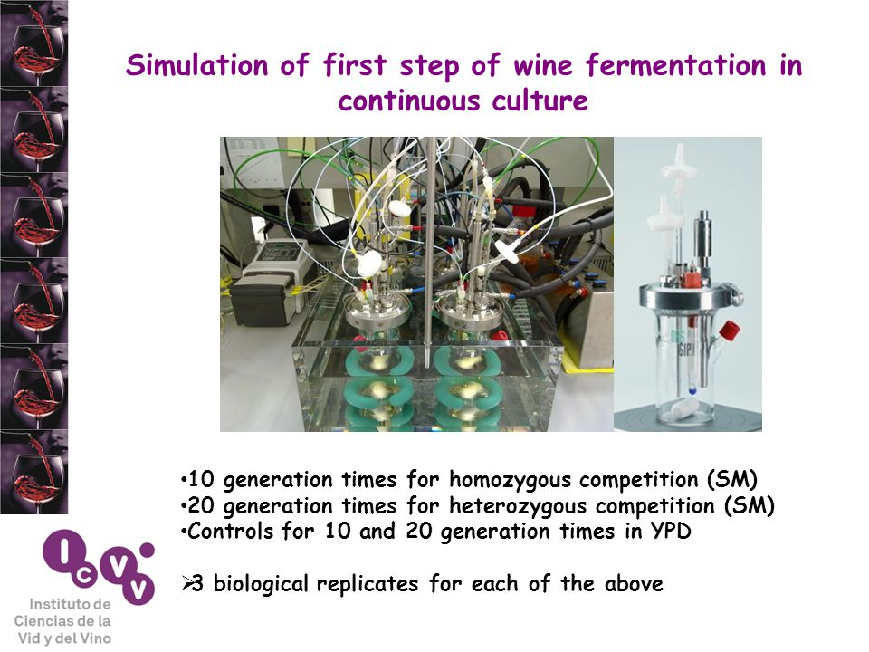 Simulation of first step of wine fermentation in continuous culture 10 generation times for homozygous competition (SM) 20 generation times for heterozygous competition (SM) Controls for 10 and 20 generation times in YPD  3 biological replicates for each of the above