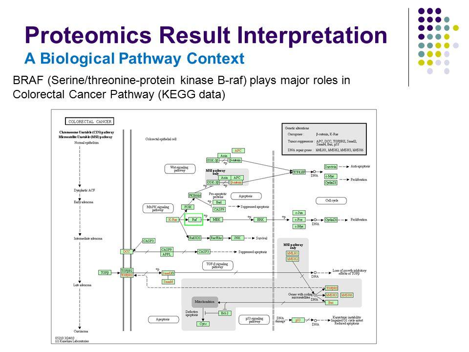 Proteomics Result Interpretation A Biological Pathway Context BRAF (Serine/threonine-protein kinase B-raf) plays major roles in Colorectal Cancer Path