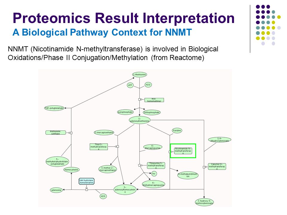 NNMT (Nicotinamide N-methyltransferase) is involved in Biological Oxidations/Phase II Conjugation/Methylation (from Reactome) Proteomics Result Interp