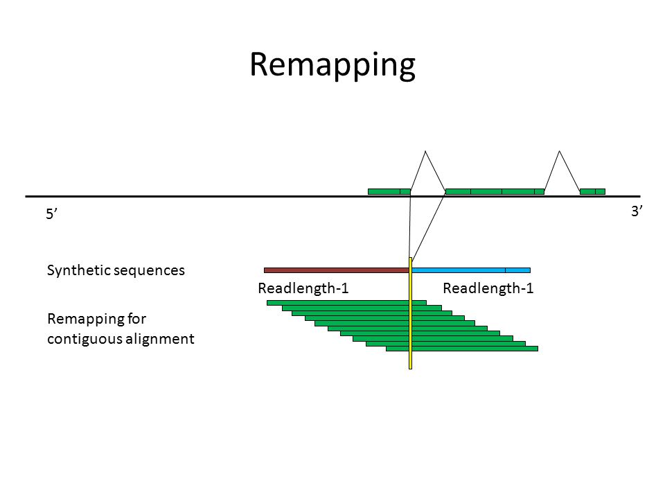 Remapping 3' 5' Readlength-1 Remapping for contiguous alignment Synthetic sequences