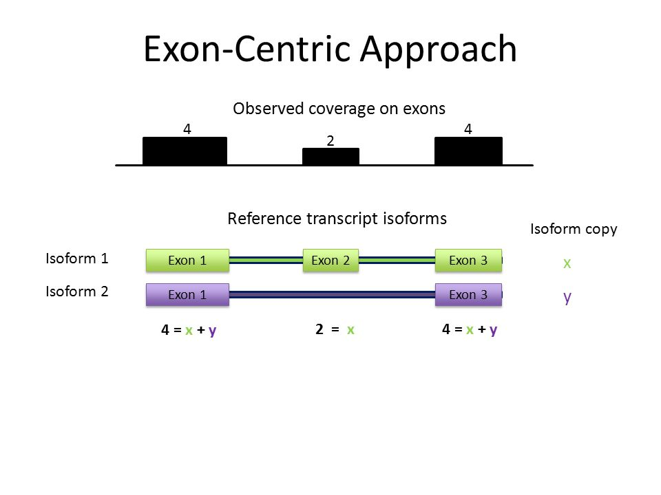 4 2 4 Isoform 1 Isoform 2 Reference transcript isoforms Exon 1Exon 2Exon 3 Exon 1Exon 3 x y Isoform copy 4 = x + y 2 = x4 = x + y Exon-Centric Approac