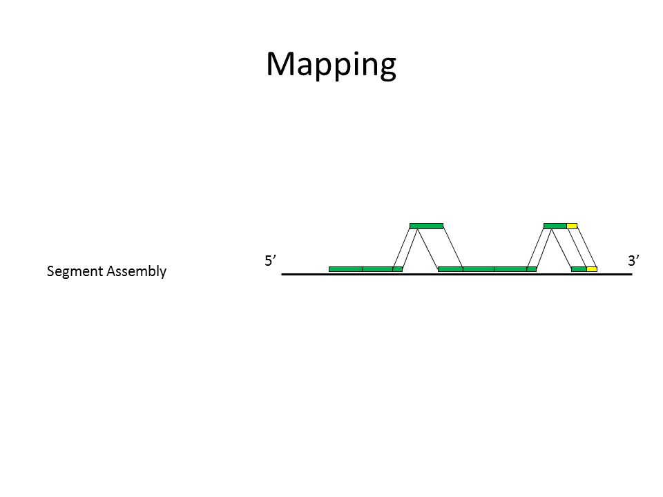 Mapping 3'5' Segment Assembly