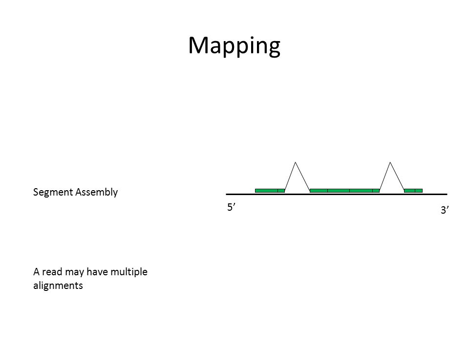 Mapping 3' 5' Segment Assembly A read may have multiple alignments