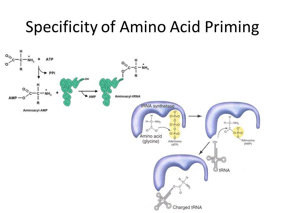 Specificity of Amino Acid Priming