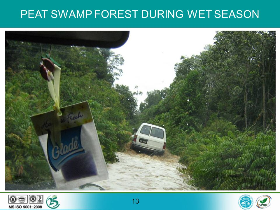 13 PEAT SWAMP FOREST DURING WET SEASON