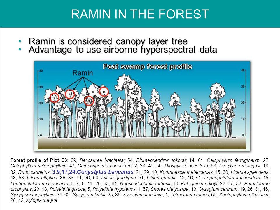 Ramin is considered canopy layer treeRamin is considered canopy layer tree Advantage to use airborne hyperspectral dataAdvantage to use airborne hyperspectral data Forest profile of Plot E3: 39, Baccaurea bracteata; 54, Blumeodendron tokbrai; 14, 61, Calophyllum ferrugineum; 27, Calophyllum sclerophyllum; 47, Camnosperma coriaceum; 2, 33, 49, 50, Diospyros lanceifolia; 53, Diospyros maingayi; 18, 32, Durio carinatus; 3,9,17,24,Gonystylus bancanus ; 21, 29, 40, Koompassia malaccensis; 15, 30, Licania splendens; 43, 58, Litsea elliptica; 36, 38, 44, 56, 60, Litsea gracilipes; 51, Litsea grandis; 12, 16, 41, Lophopetalum floribundum; 45, Lophopetalum multinervium; 6, 7, 8, 11, 20, 55, 64, Neoscortechinia forbesii; 10, Palaquium ridleyi; 22, 37, 52, Parastemon urophyllus; 23, 48, Polyalthia glauca; 5, Polyalthia hypoleuca; 1, 57, Shorea platycarpa; 13, Syzygium cerinum; 19, 26, 31, 46, Syzygium inophyllum; 34, 62, Syzygium kiahii; 25, 35, Syzygium lineatum; 4, Tetractomia majus; 59, Xantophyllum ellipticum; 28, 42, Xylopia magna.