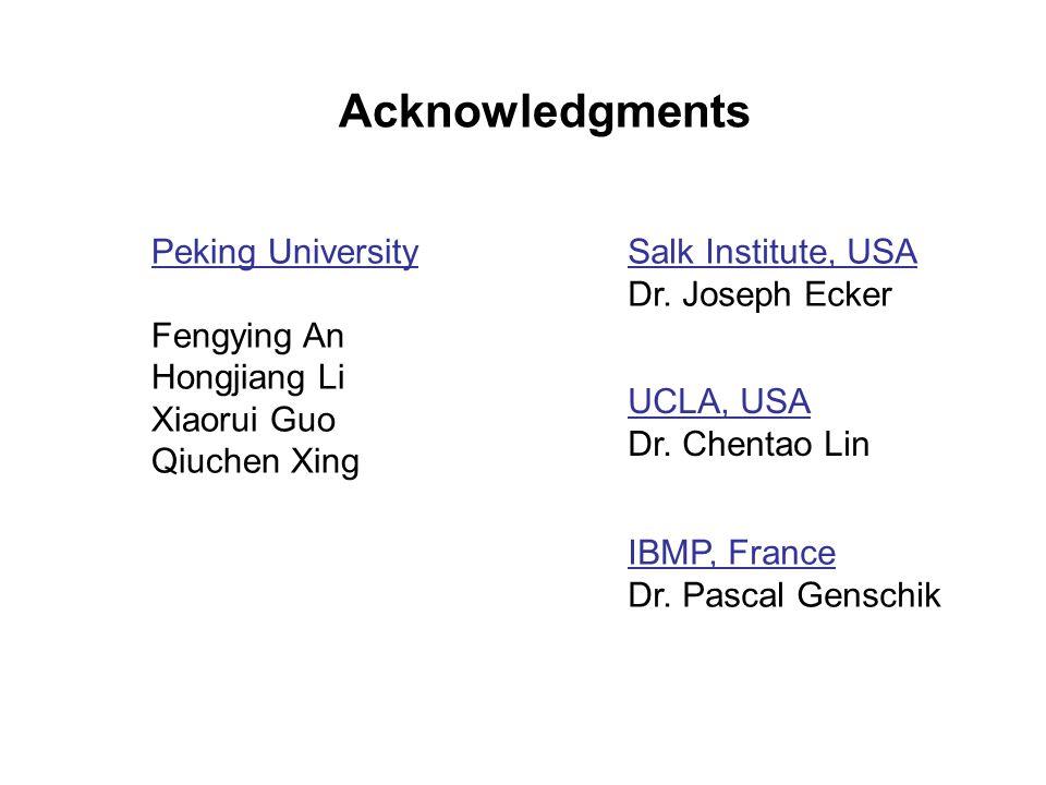 Acknowledgments Salk Institute, USA Dr. Joseph Ecker IBMP, France Dr. Pascal Genschik Peking University Fengying An Hongjiang Li Xiaorui Guo Qiuchen X