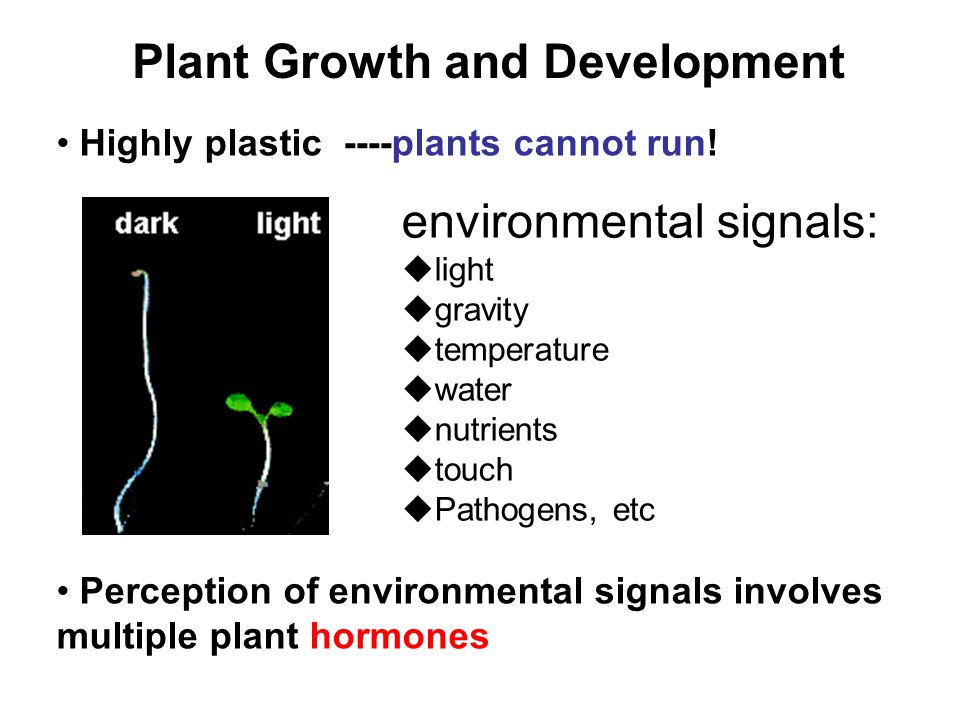 Plant Growth and Development Highly plastic ----plants cannot run! Perception of environmental signals involves multiple plant hormones environmental