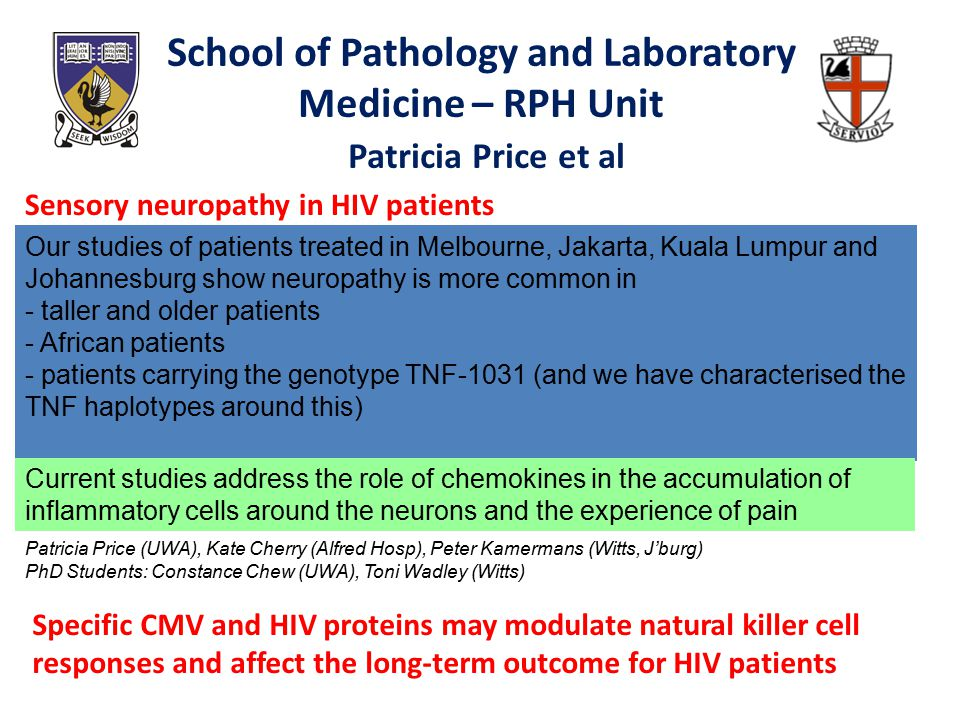 School of Pathology and Laboratory Medicine – RPH Unit Patricia Price et al Sensory neuropathy in HIV patients Our studies of patients treated in Melbourne, Jakarta, Kuala Lumpur and Johannesburg show neuropathy is more common in - taller and older patients - African patients - patients carrying the genotype TNF-1031 (and we have characterised the TNF haplotypes around this) Current studies address the role of chemokines in the accumulation of inflammatory cells around the neurons and the experience of pain Specific CMV and HIV proteins may modulate natural killer cell responses and affect the long-term outcome for HIV patients Patricia Price (UWA), Kate Cherry (Alfred Hosp), Peter Kamermans (Witts, J'burg) PhD Students: Constance Chew (UWA), Toni Wadley (Witts)