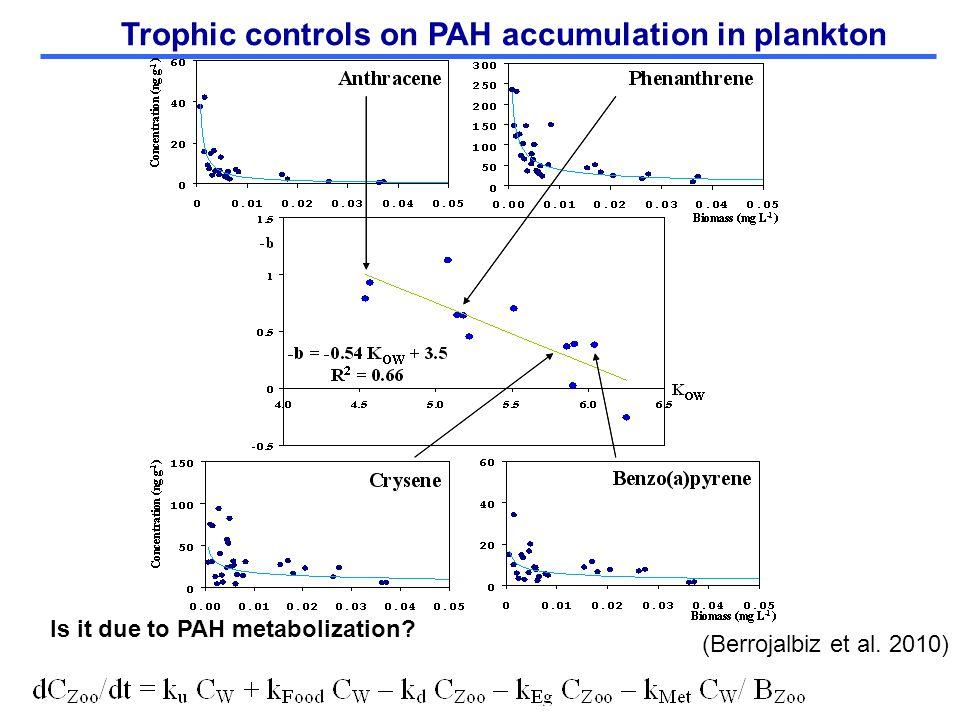 Trophic controls on PAH accumulation in plankton (Berrojalbiz et al. 2010) Is it due to PAH metabolization?
