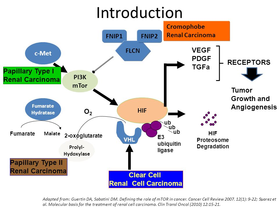 3 Introduction HIF VHL ub HIF Proteosome Degradation E3 ubiquitin ligase VEGF PDGF TGFa Tumor Growth and Angiogenesis RECEPTORS Clear Cell Renal Cell Carcinoma PI3K mTor c-Met Papillary Type I Renal Carcinoma Prolyl- Hydoxylase O2O2 Fumarate Hydratase Fumarate Malate Papillary Type II Renal Carcinoma 2-oxoglutarate Adapted from: Guertin DA, Sabatini DM.