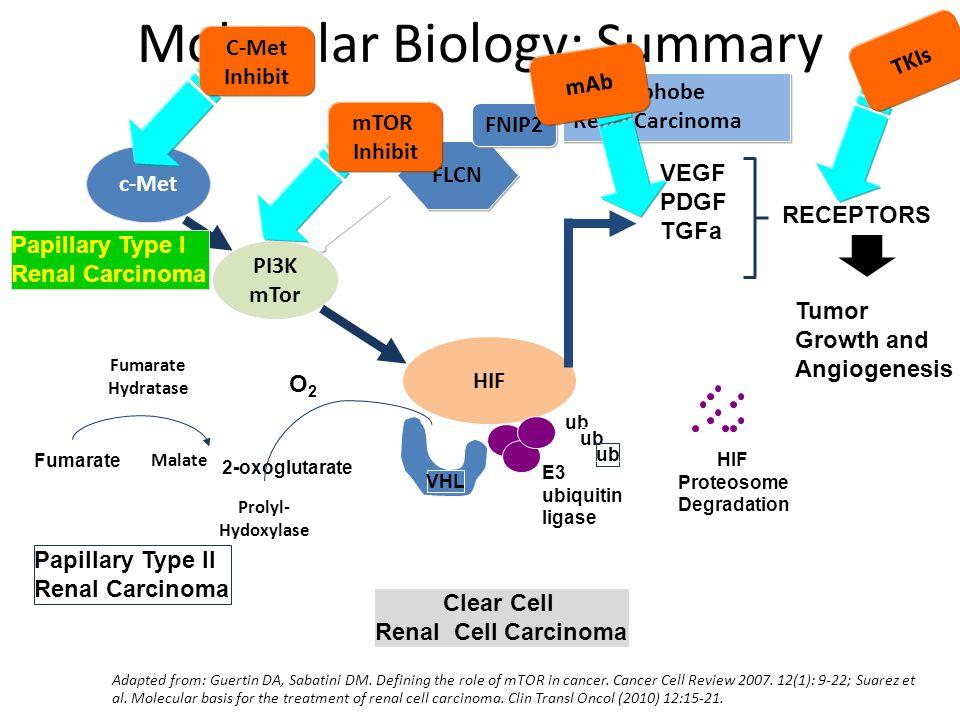 Molecular Biology: Summary HIF VHL ub HIF Proteosome Degradation E3 ubiquitin ligase VEGF PDGF TGFa Tumor Growth and Angiogenesis RECEPTORS Clear Cell Renal Cell Carcinoma PI3K mTor c-Met Papillary Type I Renal Carcinoma Prolyl- Hydoxylase O2O2 Fumarate Hydratase Fumarate Malate Papillary Type II Renal Carcinoma 2-oxoglutarate Adapted from: Guertin DA, Sabatini DM.