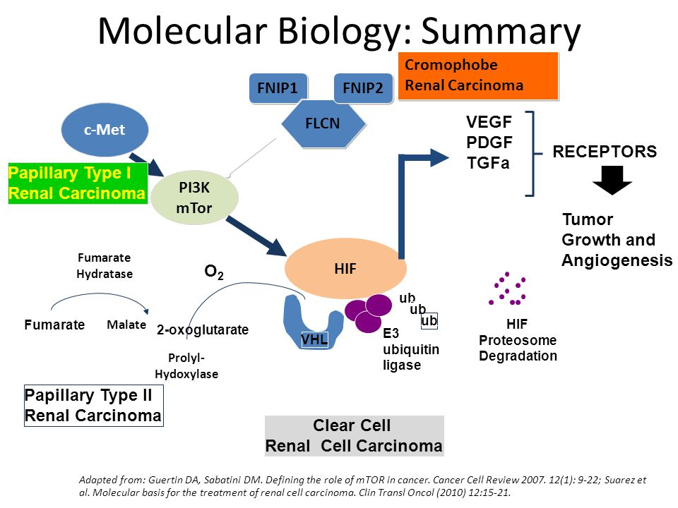 Molecular Biology: Summary HIF VHL ub HIF Proteosome Degradation E3 ubiquitin ligase VEGF PDGF TGFa Tumor Growth and Angiogenesis RECEPTORS Clear Cell Renal Cell Carcinoma PI3K mTor c-Met Papillary Type I Renal Carcinoma Prolyl- Hydoxylase O2O2 Fumarate Hydratase Fumarate Malate Papillary Type II Renal Carcinoma 2-oxoglutarate Adapted from: Guertin DA, Sabatini DM.
