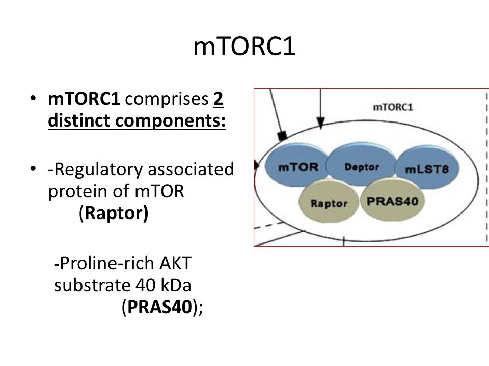 mTORC1 mTORC1 comprises 2 distinct components: -Regulatory associated protein of mTOR (Raptor) - Proline-rich AKT substrate 40 kDa (PRAS40);