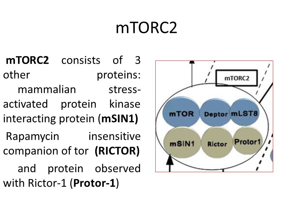 mTORC2 mTORC2 consists of 3 other proteins: mammalian stress- activated protein kinase interacting protein (mSIN1) Rapamycin insensitive companion of tor (RICTOR) and protein observed with Rictor-1 (Protor-1)