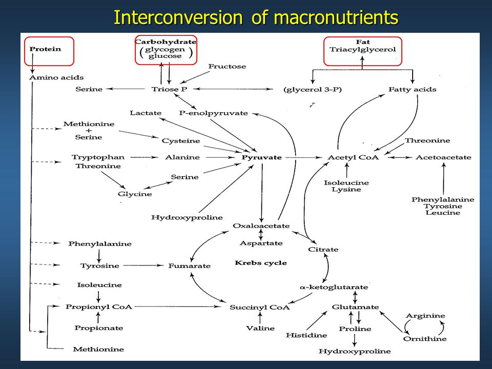 Interconversion of macronutrients