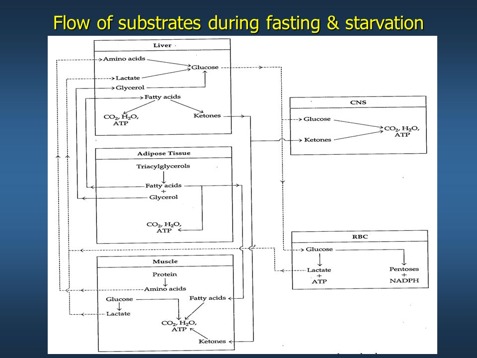 Flow of substrates during fasting & starvation