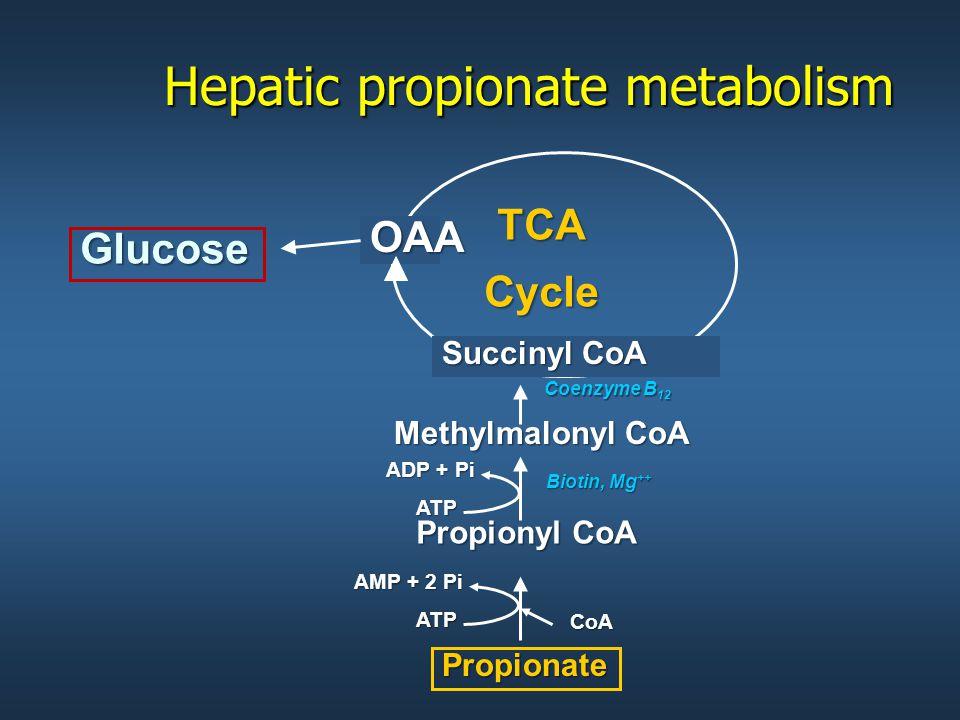 Hepatic propionate metabolism Glucose Propionate Propionyl CoA Methylmalonyl CoA Succinyl CoA OAA TCACycle Coenzyme B 12 Biotin, Mg ++ ATP AMP + 2 Pi ATP ADP + Pi CoA