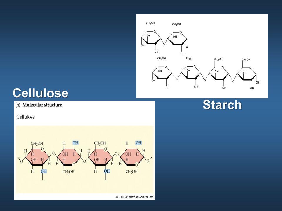 Starch Cellulose