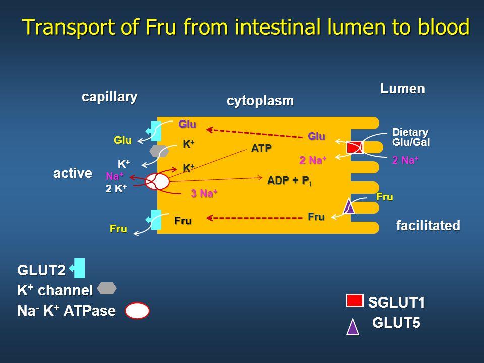 Transport of Fru from intestinal lumen to blood facilitated GLUT2 K + channel Na - K + ATPase SGLUT1 Dietary Glu/Gal Glu Glu Glu 2 Na + cytoplasm 3 Na + K+K+K+K+ K+K+K+K+ 2 K + K+K+K+K+ Na + ATP ADP + P i Lumencapillary Fru Fru GLUT5 active Fru Fru