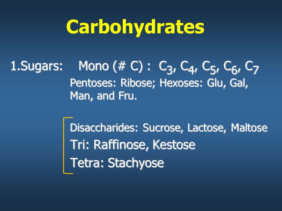 Carbohydrates 1.Sugars: Mono (# C) : C 3, C 4, C 5, C 6, C 7 Pentoses: Ribose; Hexoses: Glu, Gal, Man, and Fru.