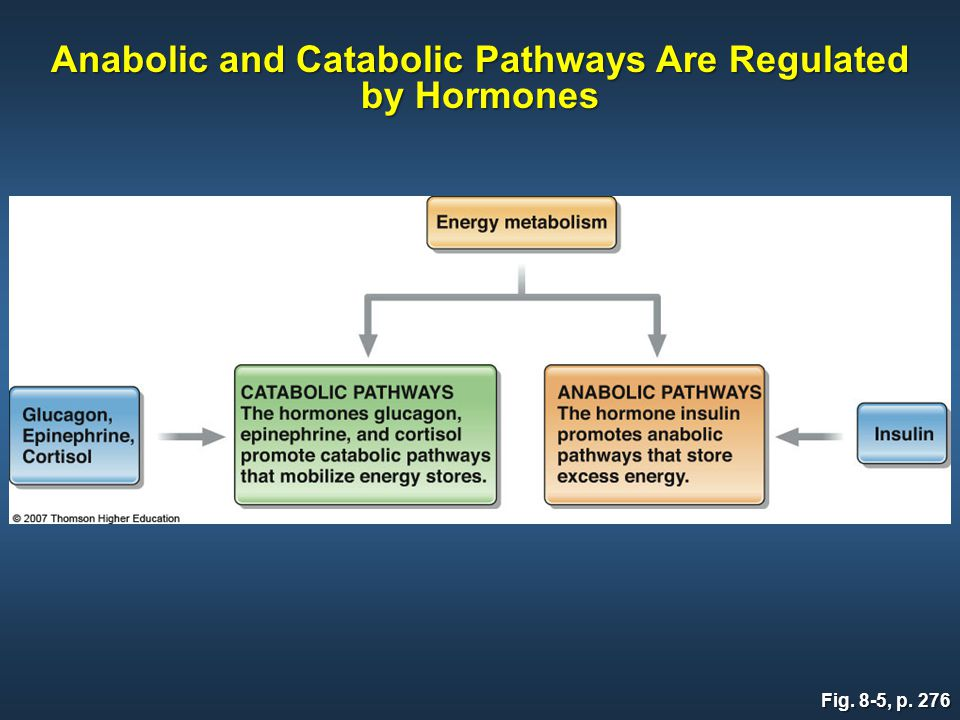 Fig. 8-5, p. 276 Anabolic and Catabolic Pathways Are Regulated by Hormones