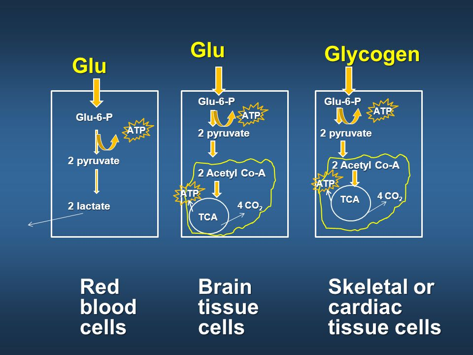 Red blood cells GluGlu-6-P 2 pyruvate 2 lactate ATP Brain tissue cells GluGlu-6-P 2 pyruvate ATP 2 Acetyl Co-A TCA 4 CO 2 ATP Skeletal or cardiac tissue cells GlycogenGlu-6-P 2 pyruvate ATP 2 Acetyl Co-A TCA 4 CO 2 ATP