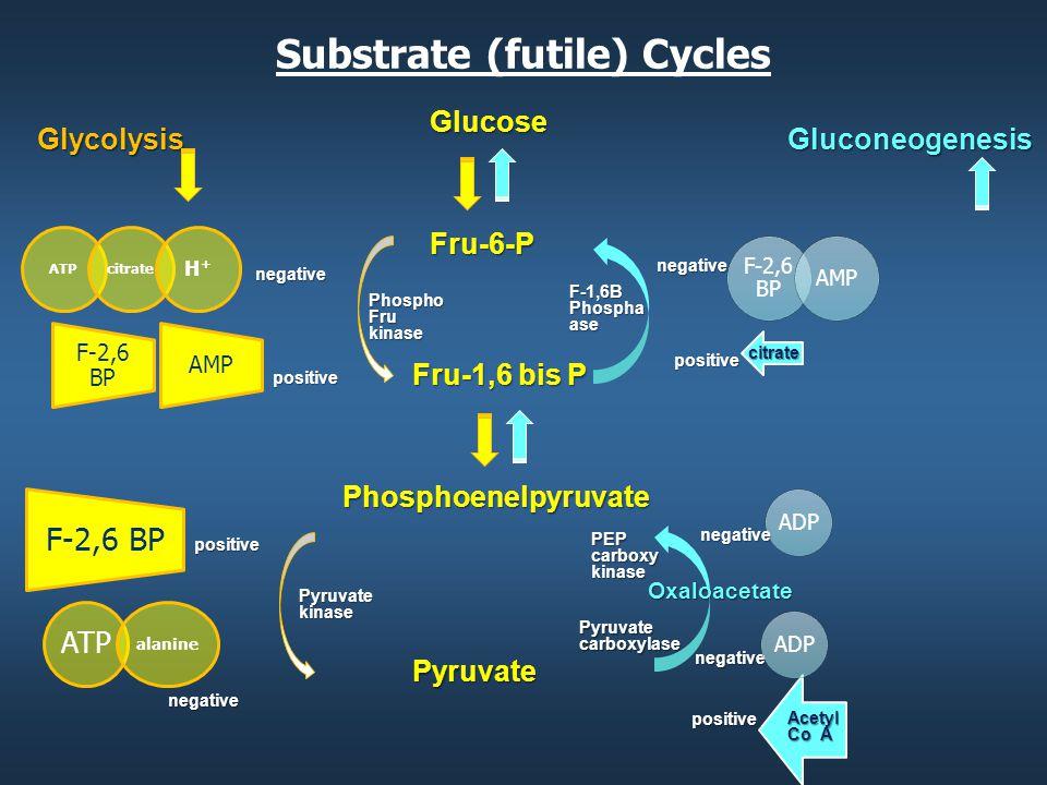 Substrate (futile) Cycles GluconeogenesisGlucoseFru-6-P Fru-1,6 bis P Phosphoenelpyruvate Pyruvate Glycolysis Oxaloacetate negative negative negative positive positive Pyruvate kinase PEP carboxy kinase Pyruvate carboxylase negative negative citrate positive positive Acetyl Co A Phospho Fru kinase F-1,6B Phospha ase