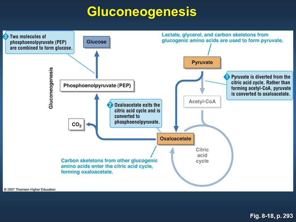 Fig. 8-18, p. 293 Gluconeogenesis