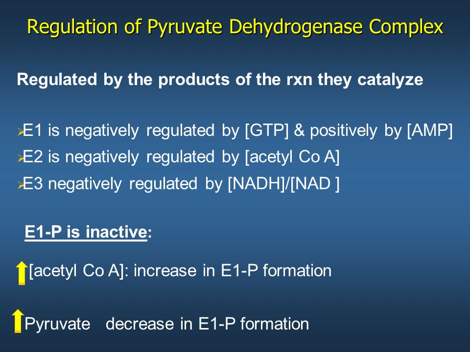 Regulation of Pyruvate Dehydrogenase Complex Regulated by the products of the rxn they catalyze   E1 is negatively regulated by [GTP] & positively by [AMP]   E2 is negatively regulated by [acetyl Co A]   E3 negatively regulated by [NADH]/[NAD ] E1-P is inactive : [acetyl Co A]: increase in E1-P formation Pyruvate decrease in E1-P formation