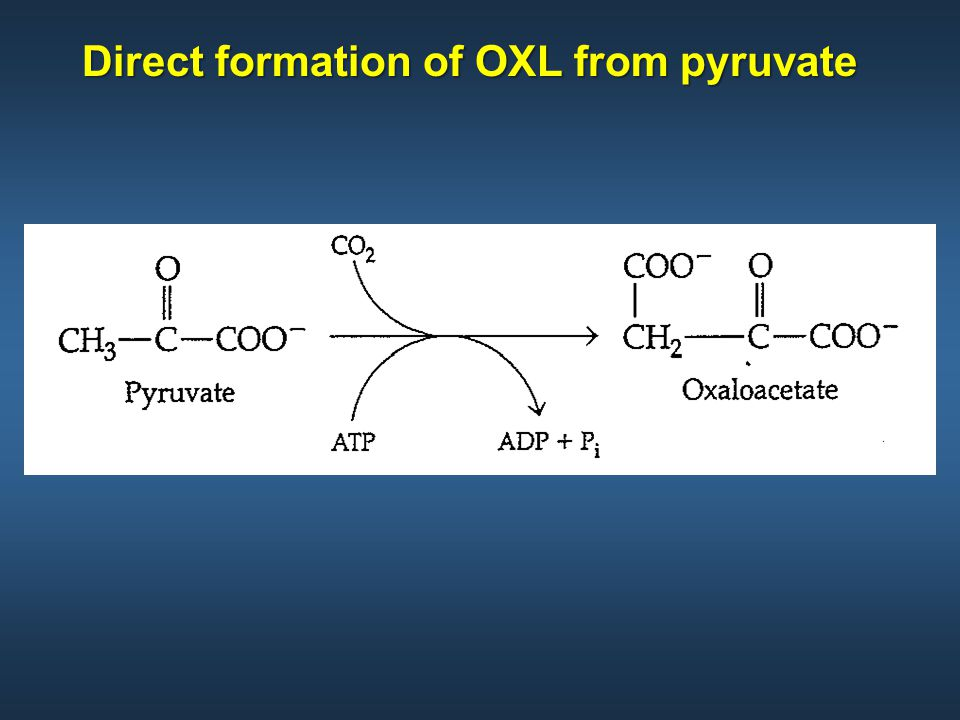 Direct formation of OXL from pyruvate