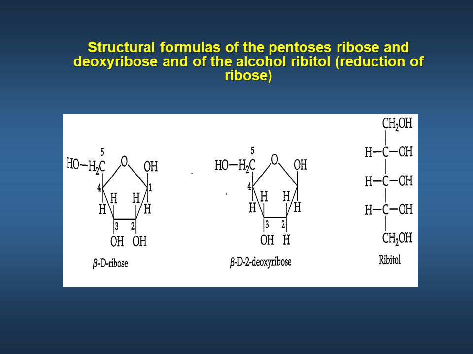 Structural formulas of the pentoses ribose and deoxyribose and of the alcohol ribitol (reduction of ribose)