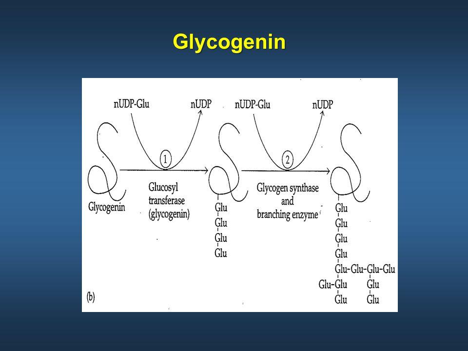 Glycogenin