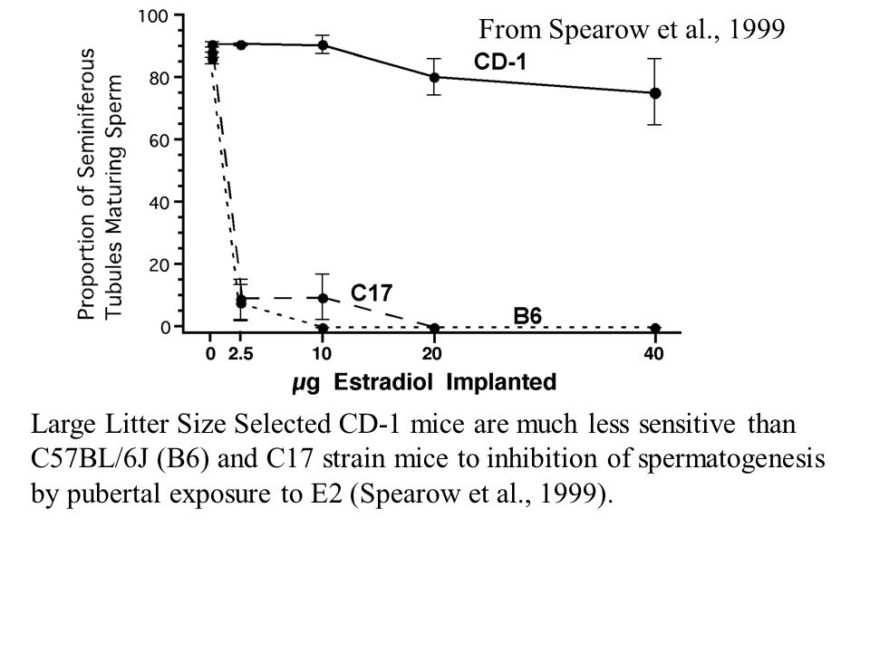 From Spearow et al., 1999 Large Litter Size Selected CD-1 mice are much less sensitive than C57BL/6J (B6) and C17 strain mice to inhibition of spermatogenesis by pubertal exposure to E2 (Spearow et al., 1999).