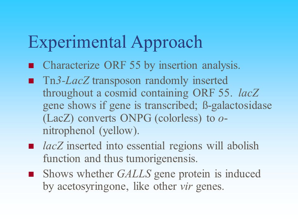 Experimental Approach Characterize ORF 55 by insertion analysis. Tn3-LacZ transposon randomly inserted throughout a cosmid containing ORF 55. lacZ gen