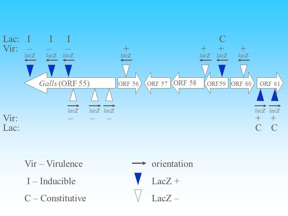 Galls (ORF 55) ORF 56ORF 57 ORF 58 ORF59ORF 60ORF 61 lacZ Vir: – – – + + + + Vir: – – – + + Lac: I I I C Lac: C C Vir – Virulence I – Inducible C – Co