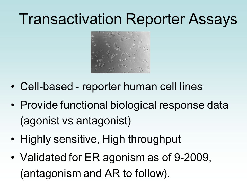 Transactivation Reporter Assays Cell-based - reporter human cell lines Provide functional biological response data (agonist vs antagonist) Highly sensitive, High throughput Validated for ER agonism as of 9-2009, (antagonism and AR to follow).