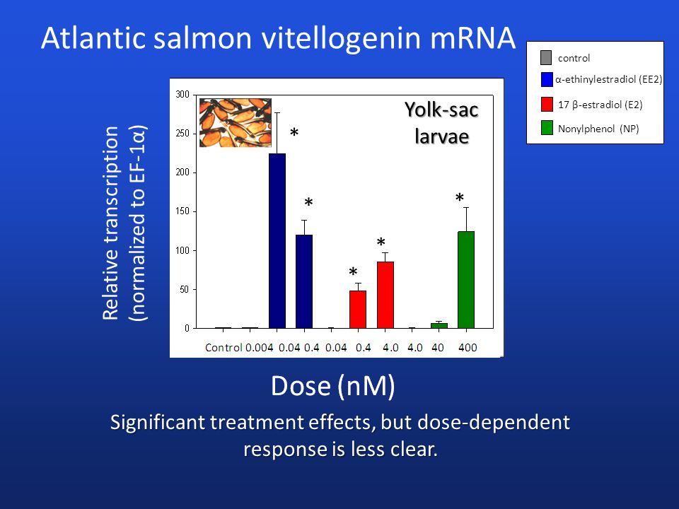 Atlantic salmon vitellogenin mRNA α-ethinylestradiol (EE2) 17 β-estradiol (E2) Nonylphenol (NP) control Significant treatment effects, but dose-dependent response is less clear.