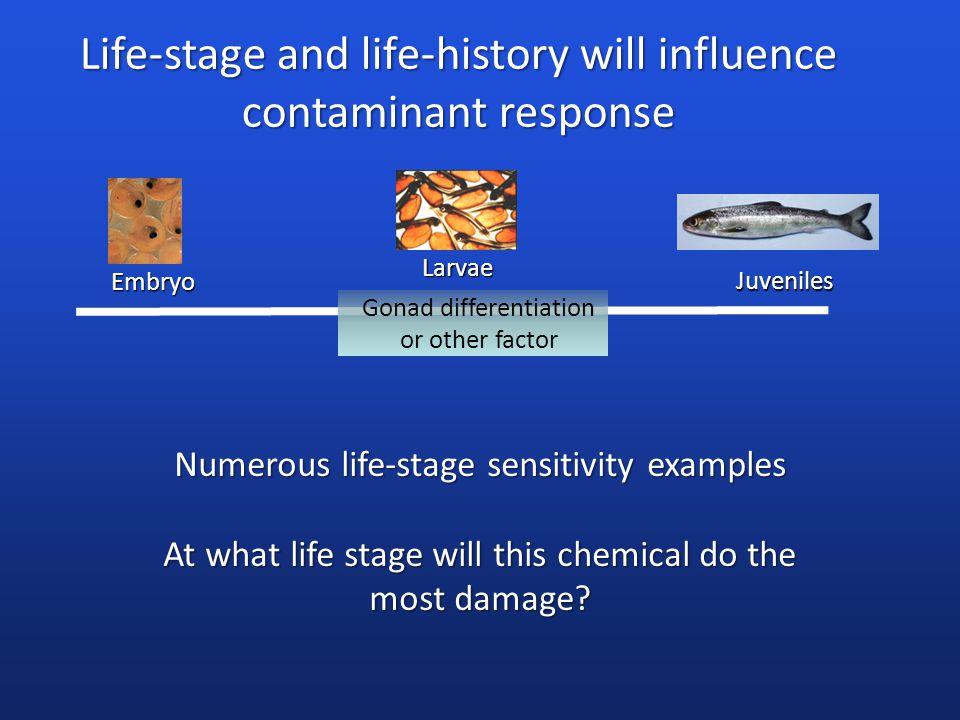 Sturgeon Vtg mRNA Relative Vtg transcription Dose (nM) Preliminary data Vtg response less robust than in salmon Full analysi Full analysis will demonstrate if Vtg is an appropriate biomarker in early life-stage sturgeon Feeding fry