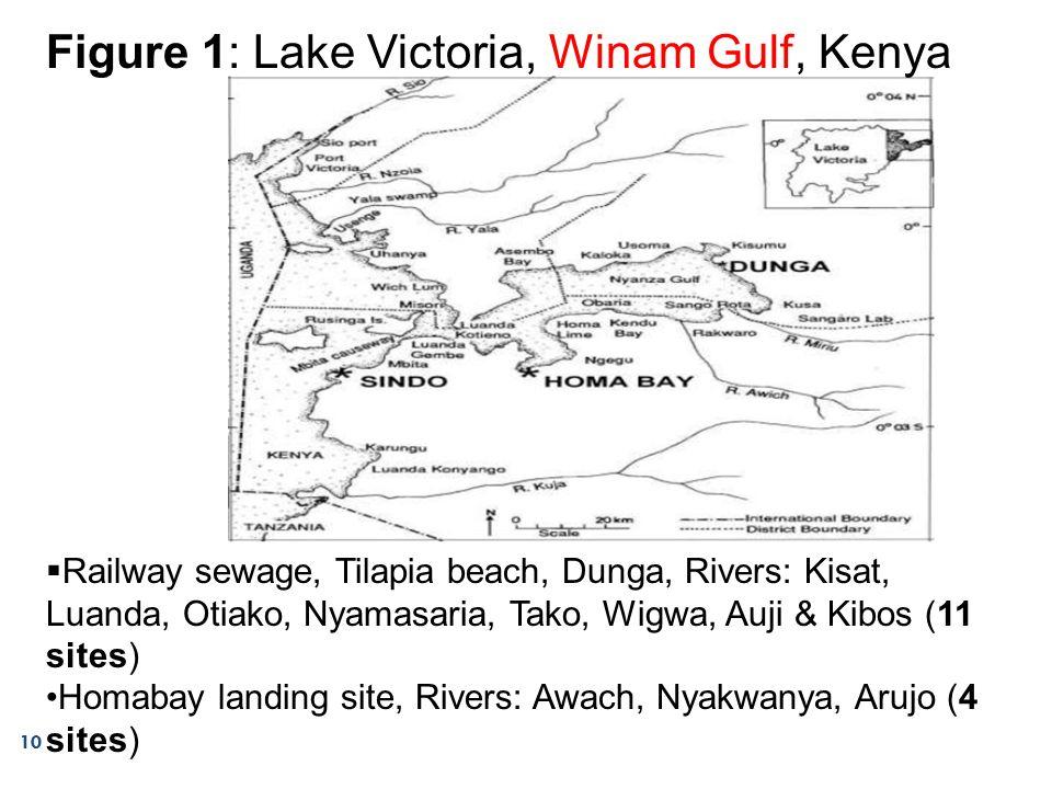 10 Figure 1: Lake Victoria, Winam Gulf, Kenya  Railway sewage, Tilapia beach, Dunga, Rivers: Kisat, Luanda, Otiako, Nyamasaria, Tako, Wigwa, Auji & Kibos (11 sites) Homabay landing site, Rivers: Awach, Nyakwanya, Arujo (4 sites)