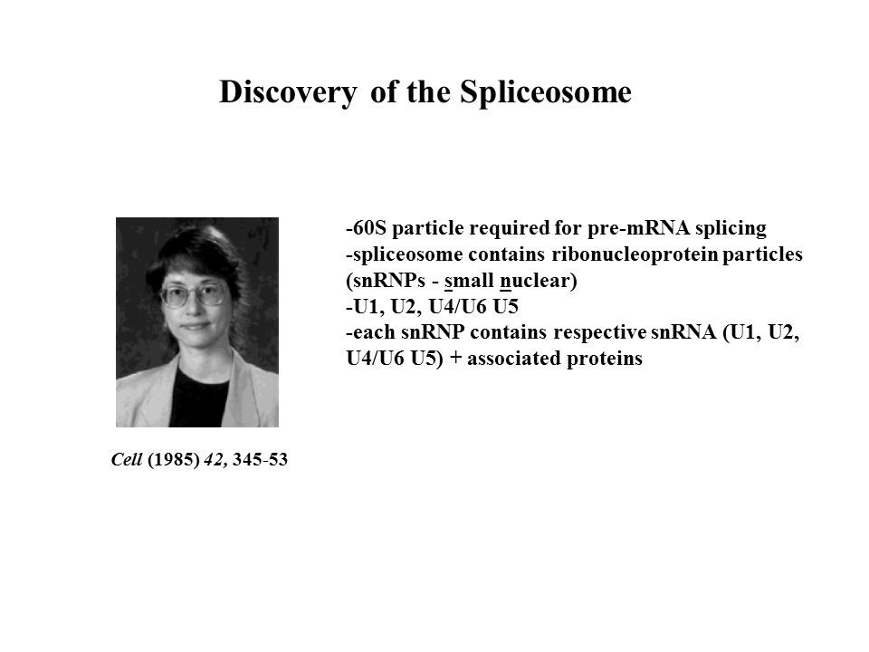Discovery of the Spliceosome Cell (1985) 42, 345-53 -60S particle required for pre-mRNA splicing -spliceosome contains ribonucleoprotein particles (snRNPs - small nuclear) -U1, U2, U4/U6 U5 -each snRNP contains respective snRNA (U1, U2, U4/U6 U5) + associated proteins