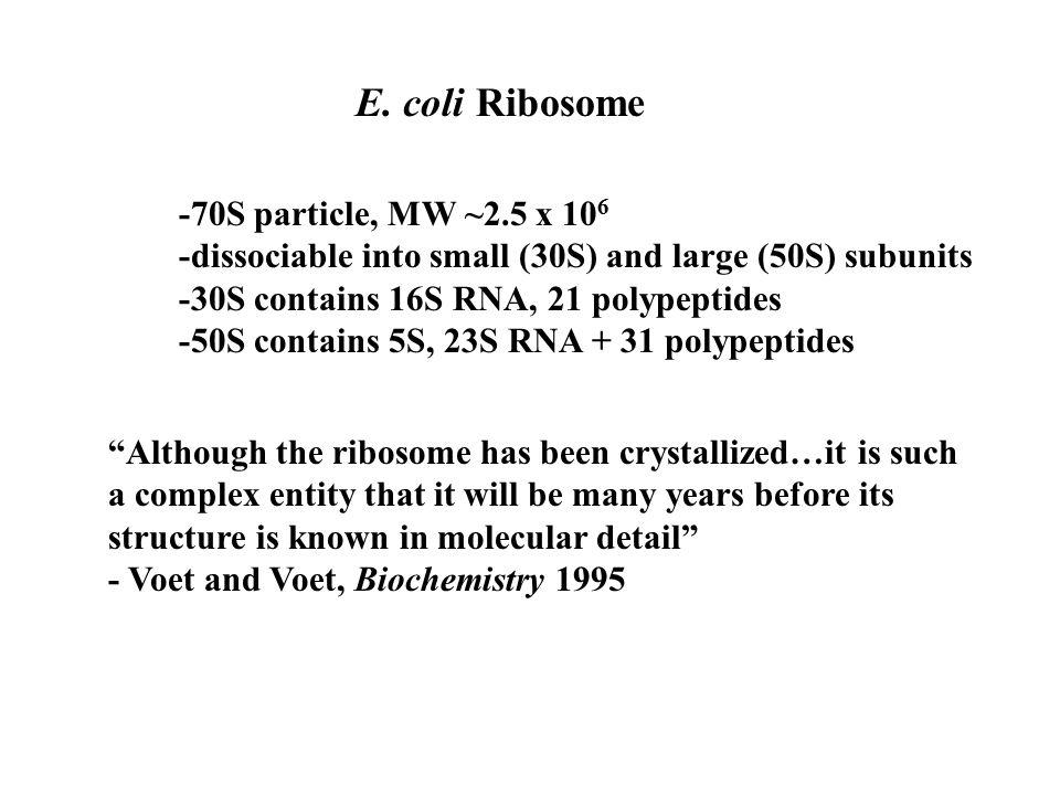 E. coli Ribosome -70S particle, MW ~2.5 x 10 6 -dissociable into small (30S) and large (50S) subunits -30S contains 16S RNA, 21 polypeptides -50S cont