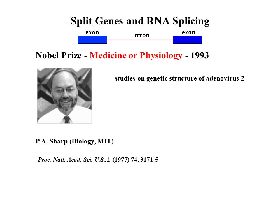 Split Genes and RNA Splicing Nobel Prize - Medicine or Physiology - 1993 P.A.