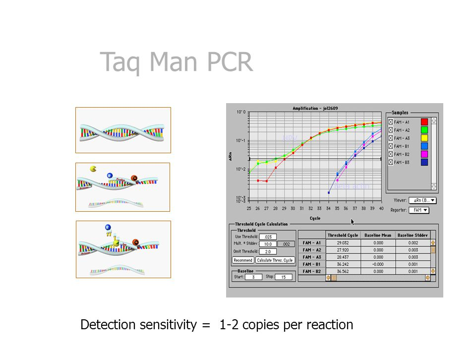 Taq Man PCR Detection sensitivity = 1-2 copies per reaction HPV Beta actin