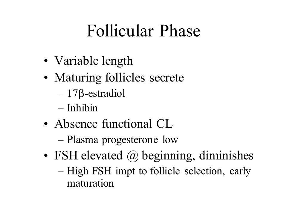 Follicular Phase Variable length Maturing follicles secrete –17  -estradiol –Inhibin Absence functional CL –Plasma progesterone low FSH elevated @ be